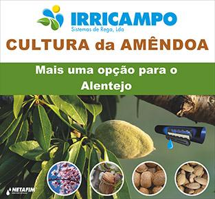 Coloquio_Amendoeiras