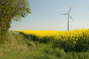 ist1_3276312-wind-turbines-and-rapeseed-field1